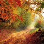 Road Forest Season Autumn Fall  - Valiphotos / Pixabay